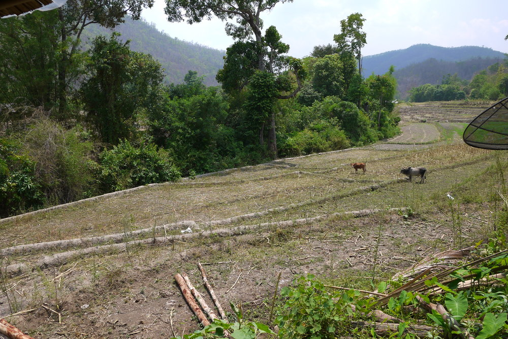 A field surrounding the weavers' working space in Mae Chaem. In the future, the women would like to grow and harvest their own cotton to produce their textiles.