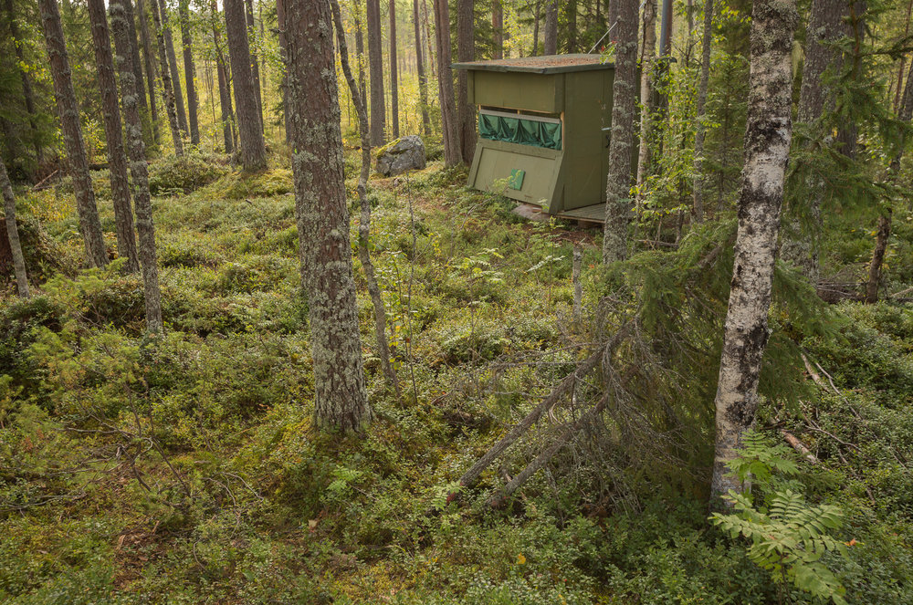 Brown Bear Photography Tour-12.jpg
