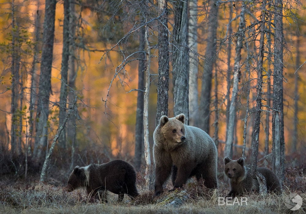 Brown Bear Photography Tour.jpg