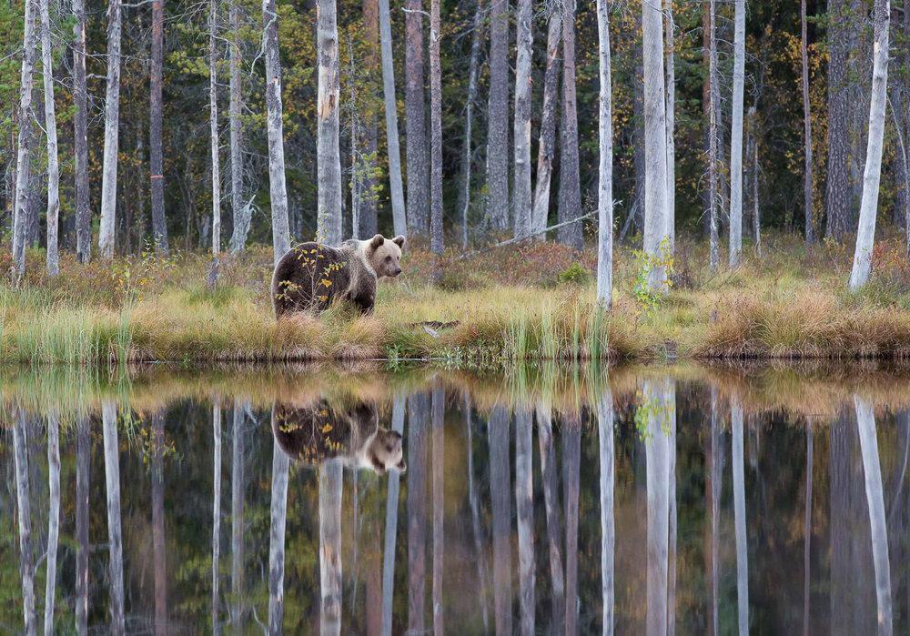 Brown Bear Photography Tour Finland_-2.jpg