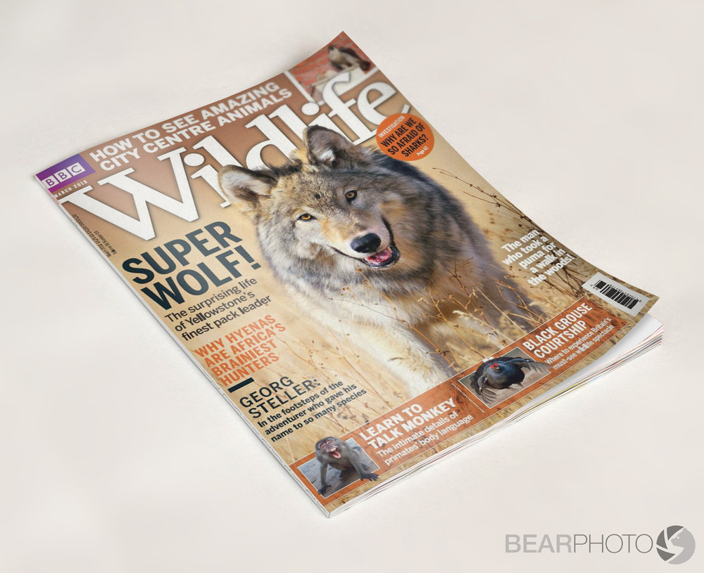 BBC_Wildlife_BearPhoto.jpg
