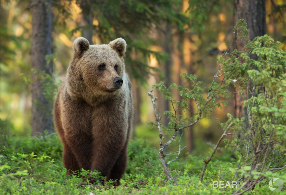 BearPhoto_NTTL_Harry_Read-4.jpg