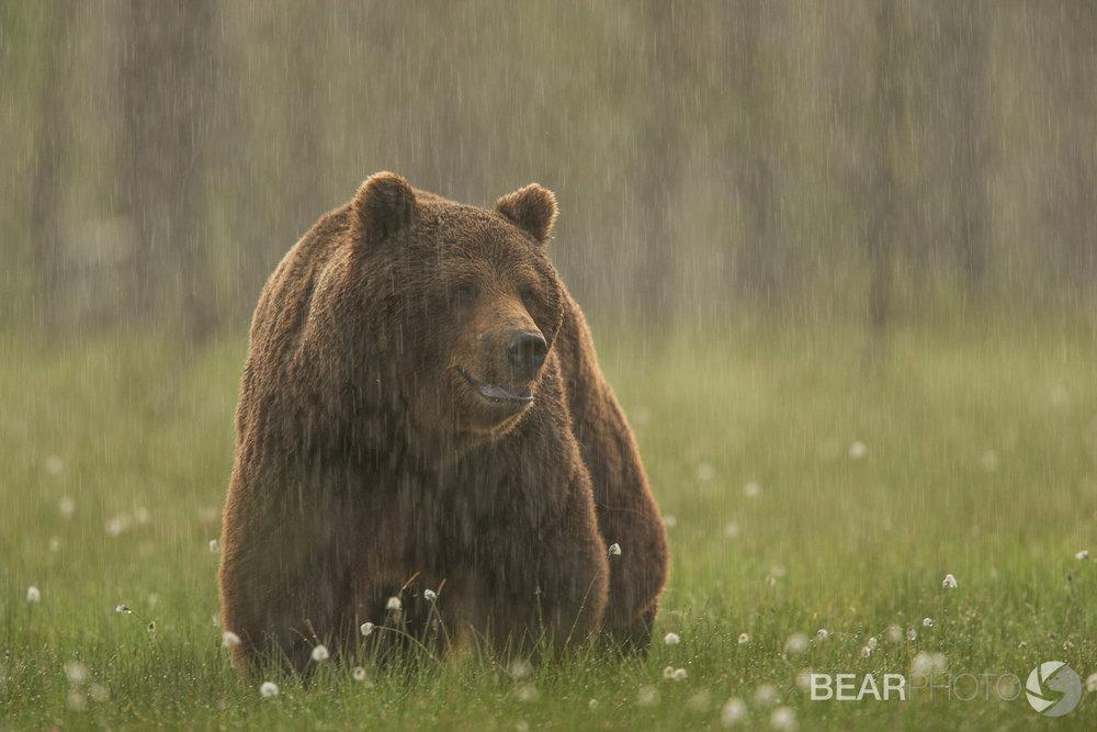 BearPhoto_NTTL_Kyle_Moore-5.jpg