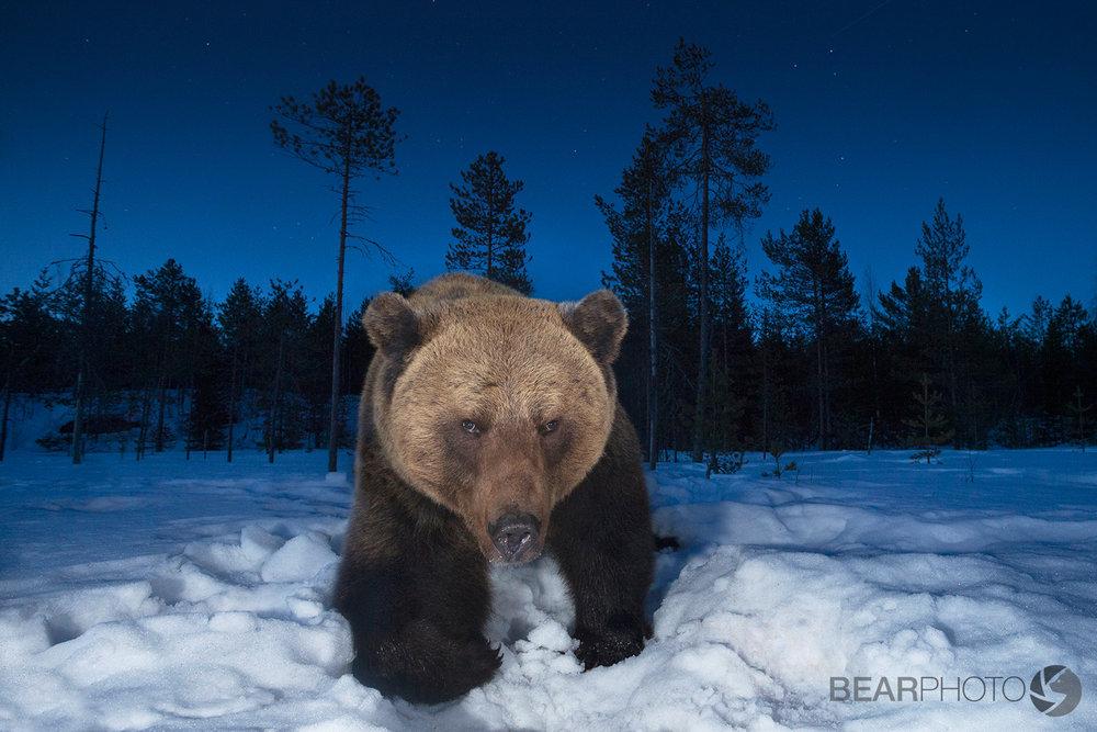 BearPhoto_NTTL_Kyle_Moore-10.jpg