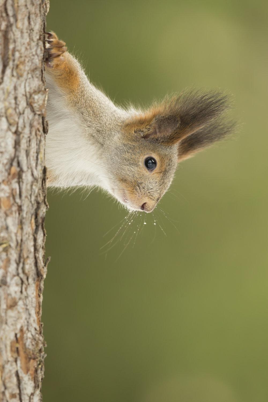 Squirrel_MG_0160.jpg