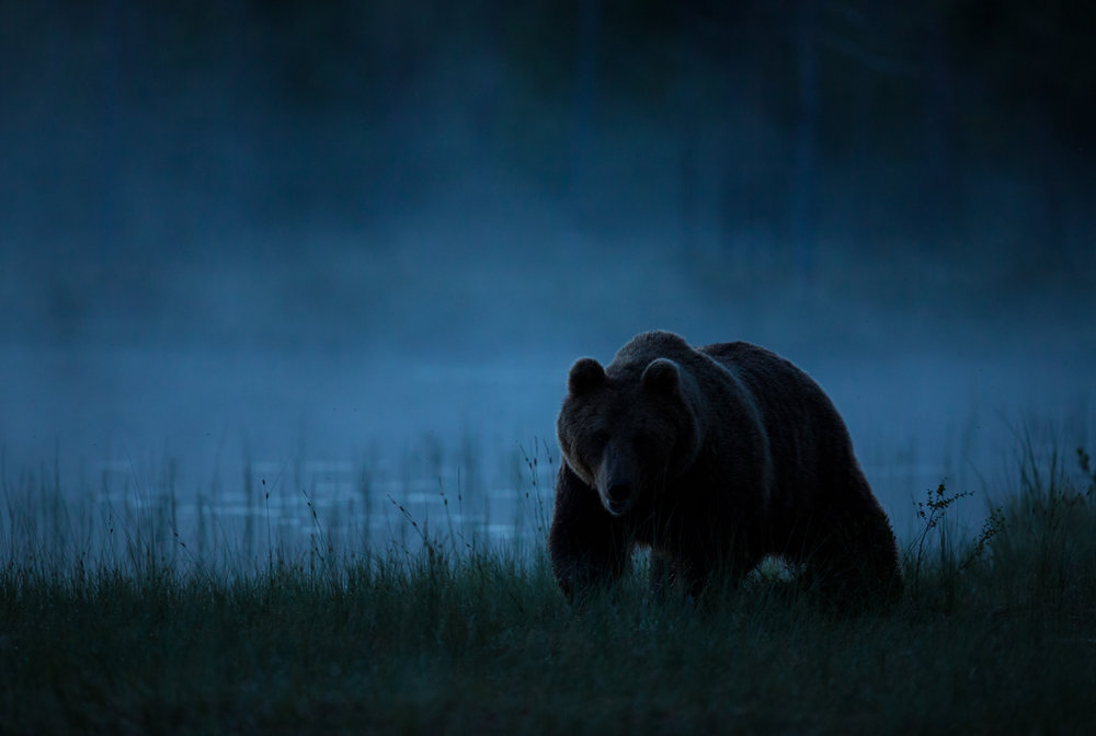 Brown bear photography tour Finland-22.jpg