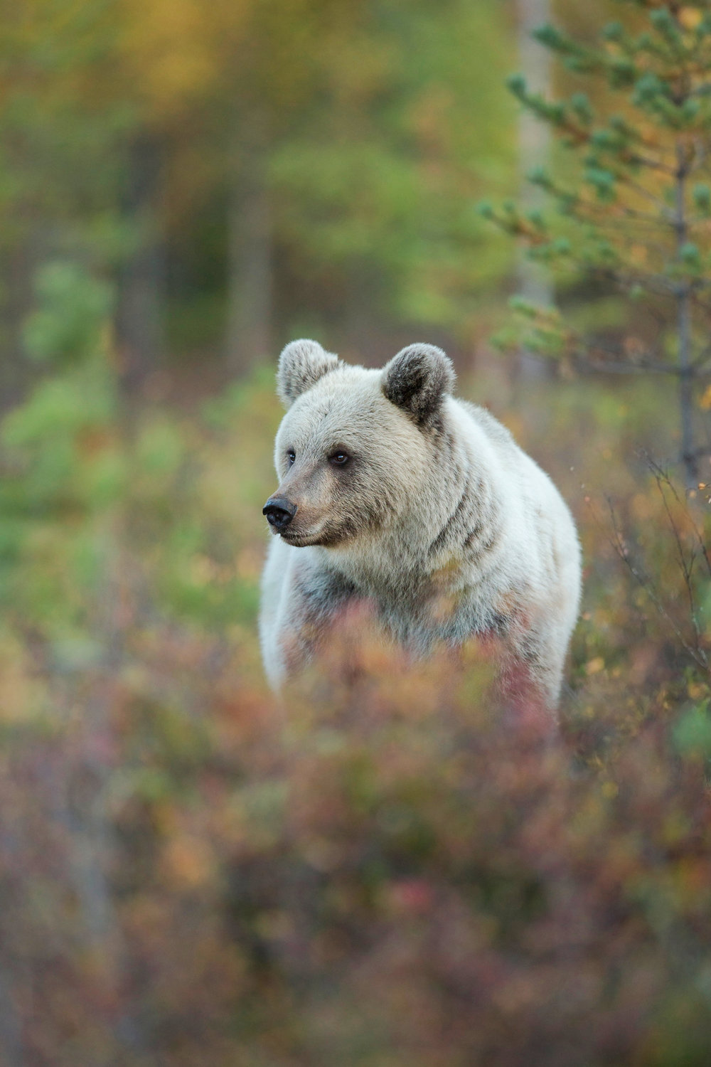 Autumn Brown Bear Trip-2.jpg