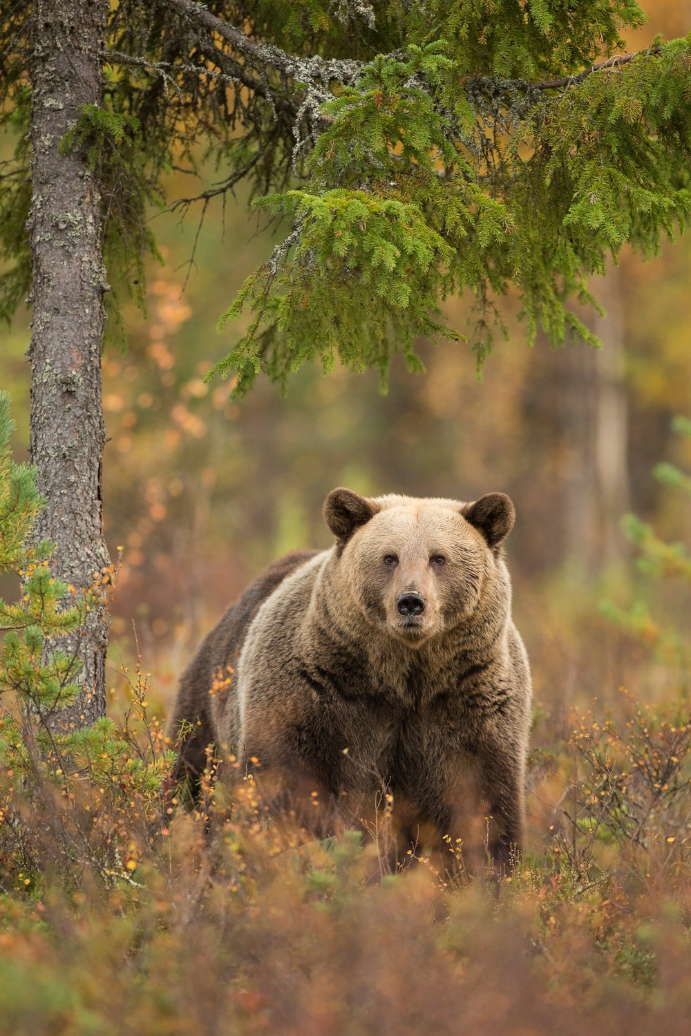 Autumn Brown Bear Trip-3.jpg