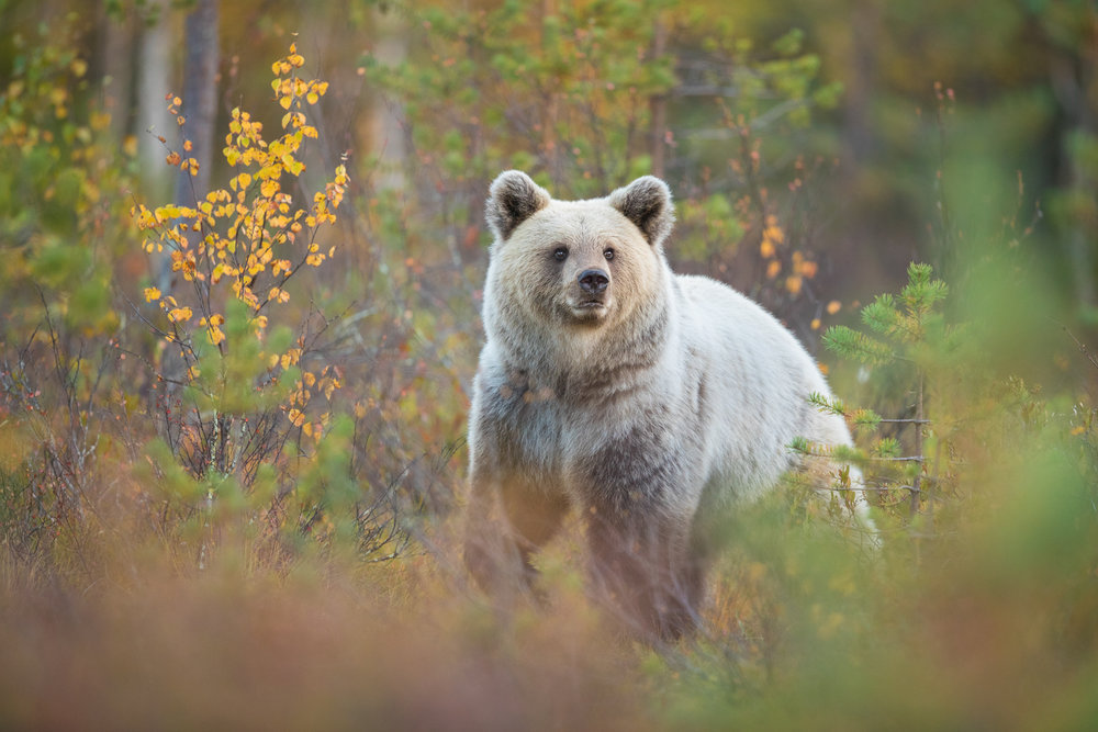 Autumn Brown Bear Trip-5.jpg