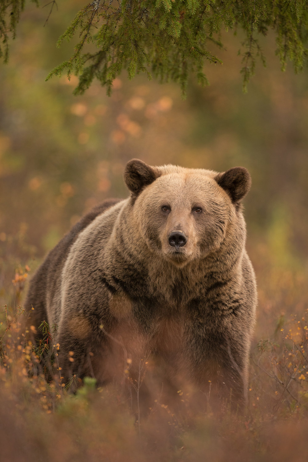 Autumn Brown Bear Trip-8.jpg