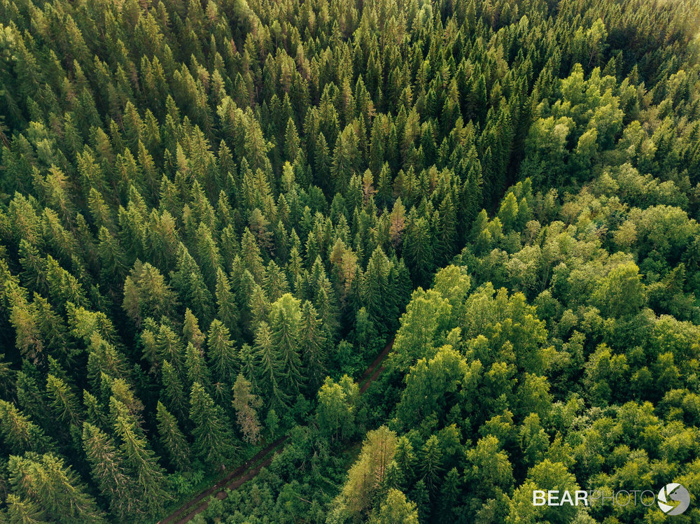 The boreal forest in summer photographed from above.