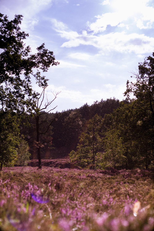 Heide-7.jpg