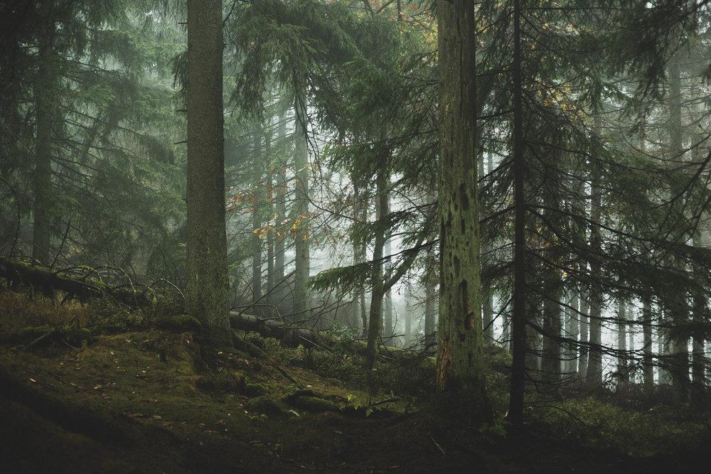 Harz'18-20.jpg