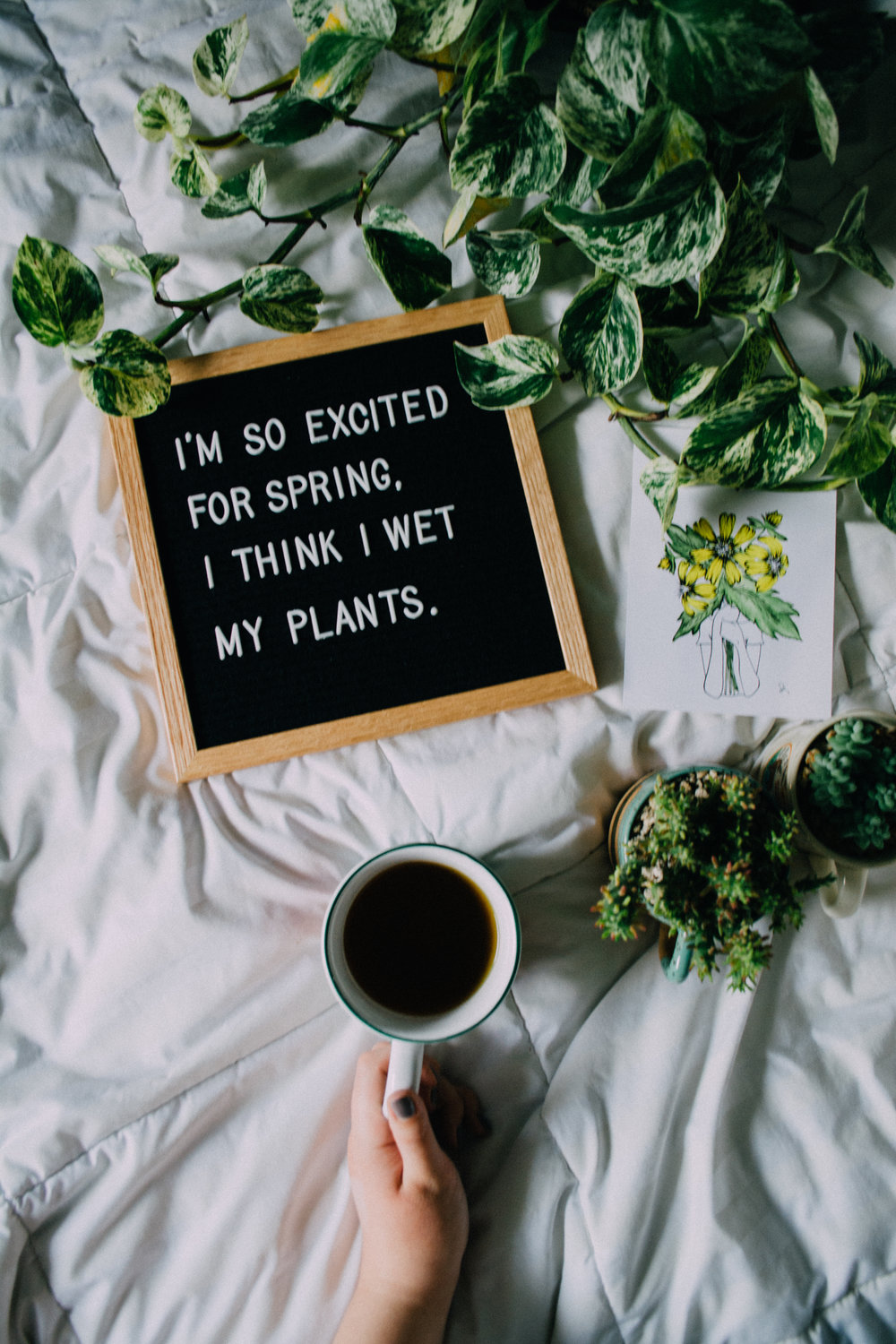 And why the heck I'm a plant mom! -