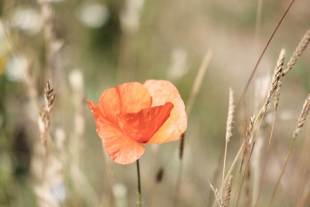 Poppy, Fuji XT-1, 35mm, f2, 1/4000s