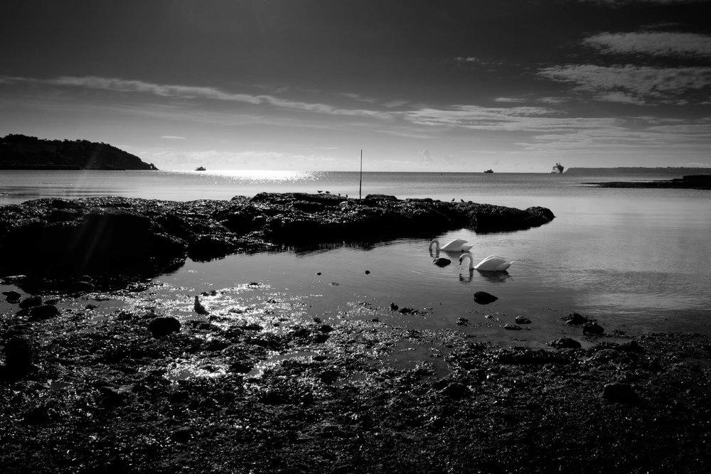 Swans, Torquay, Fuji X70