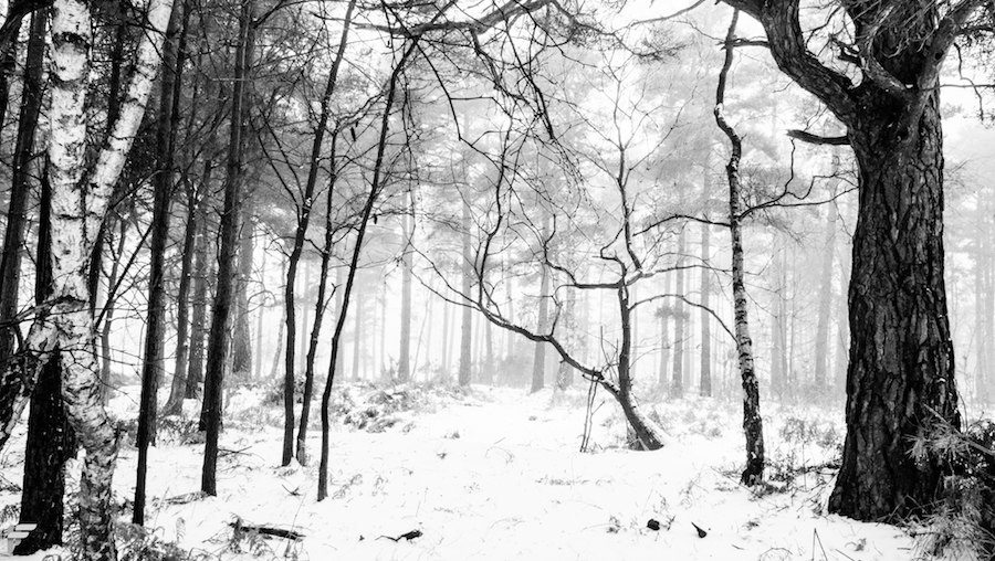 Woodland Snow - Fuji X70