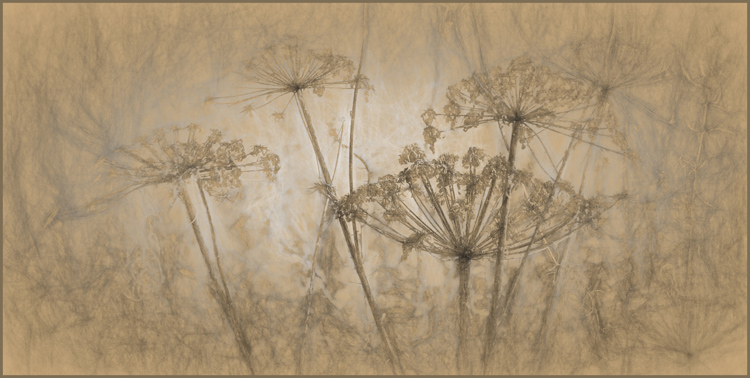 Maureen Rush - Seedheads