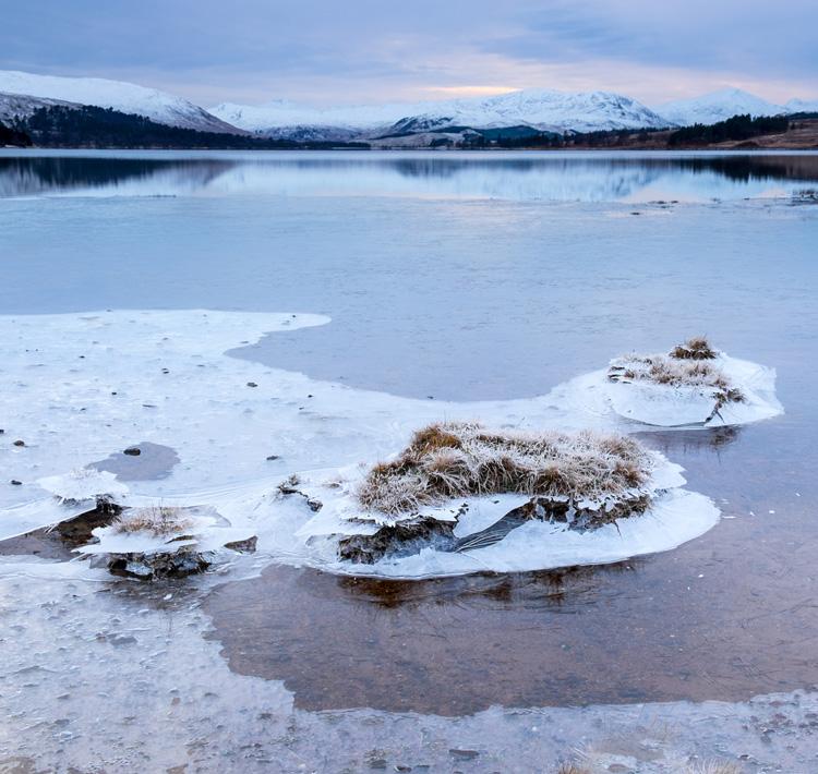 Ice Flora by Katrina Brayshaw