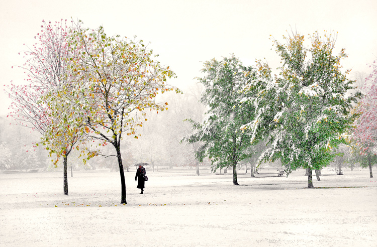 Early snow, Harrogate Stray