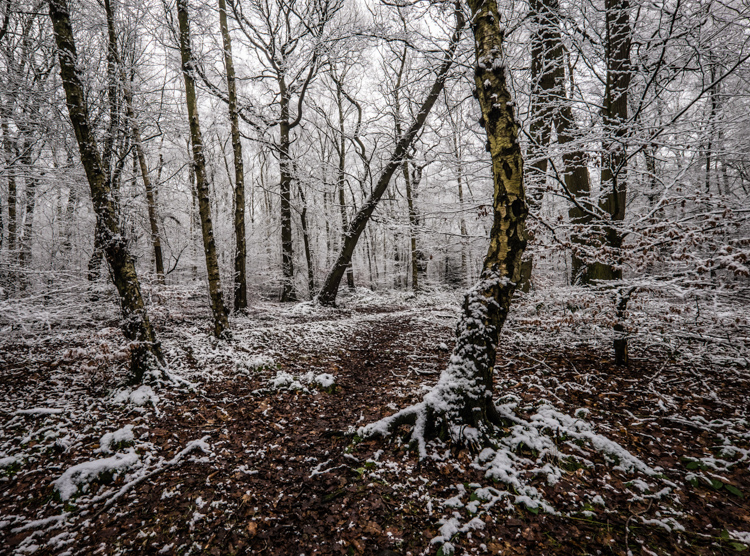 Winter, Hookstone Woods