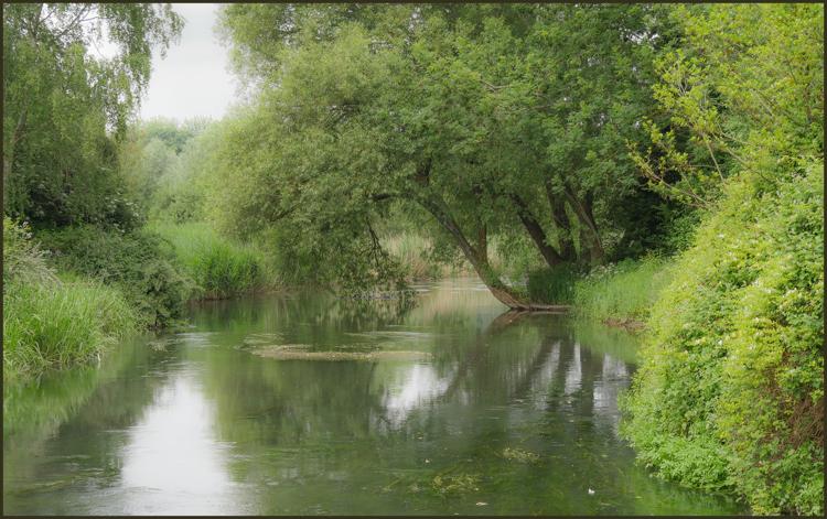 Harnham Water Meadows by Maureen Rush