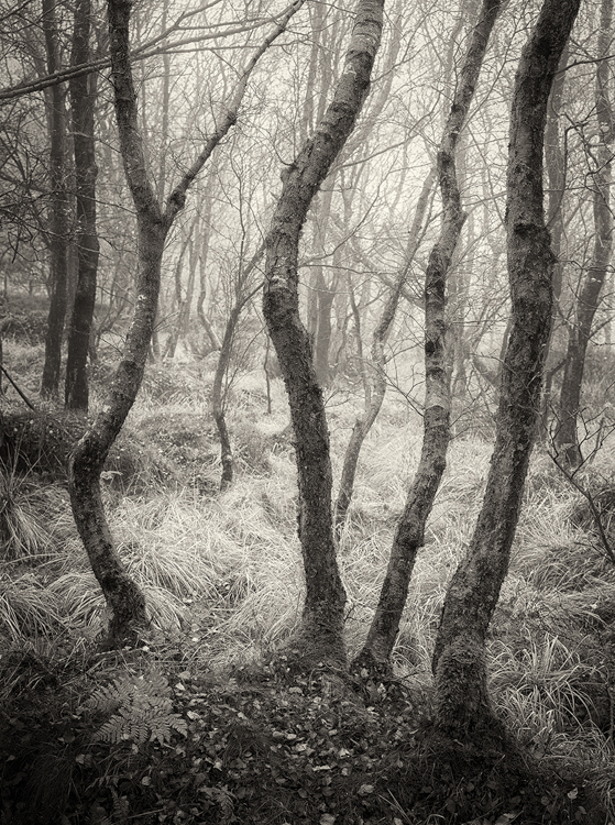 The Wonky Wood by Steve Oxley