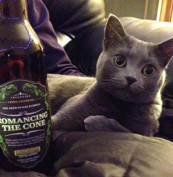 Rosie's first #beercat picture.