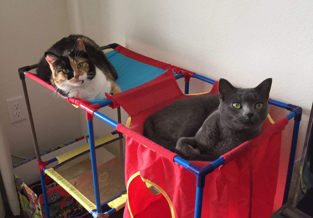Rosie and Milly sharing double occupancy in their kitty city tower.
