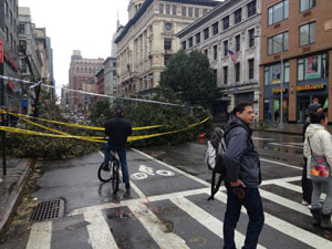 Downed-Tree
