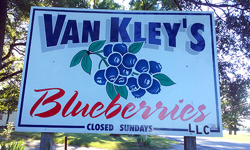 Van-Kley-Blueberry-picking-indiana.jpg