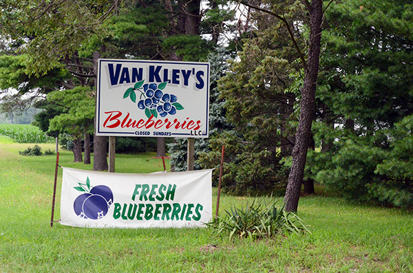 van-kleys-fresh-blueberries.jpg