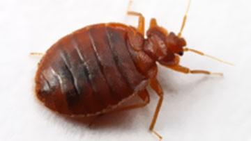 Bed Bugs Mattress Encasement