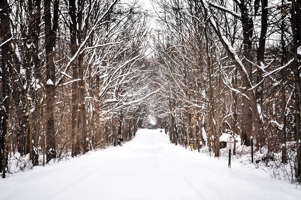 Winter trail.jpg