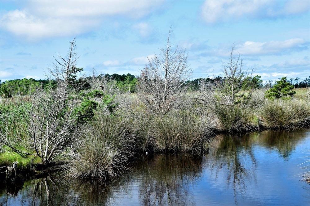 North Carolina Swamp?