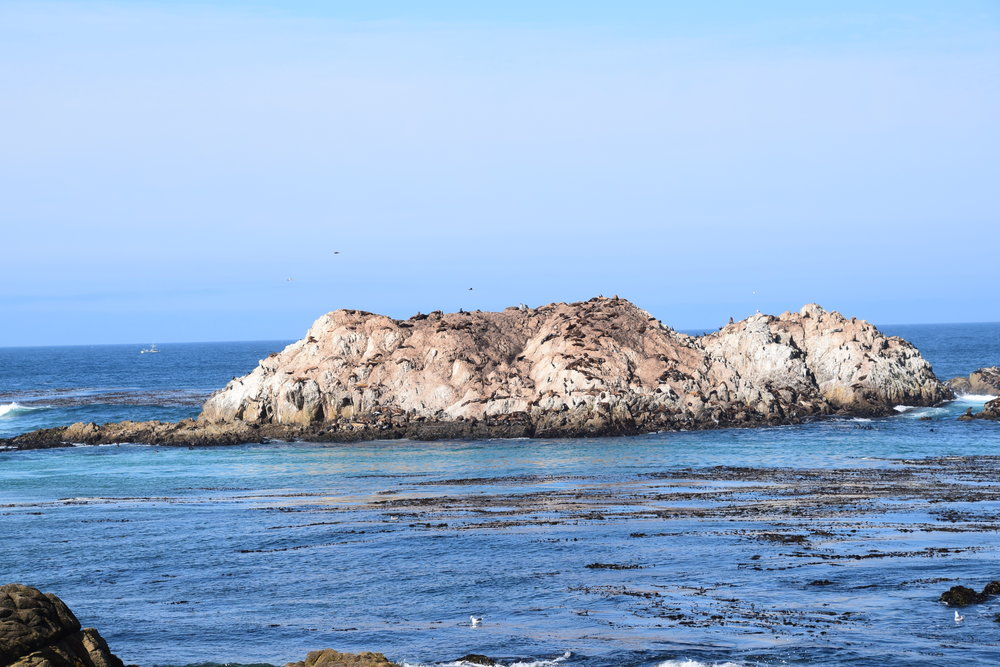 17-Mile Drive, Seal Rock Picnic Area