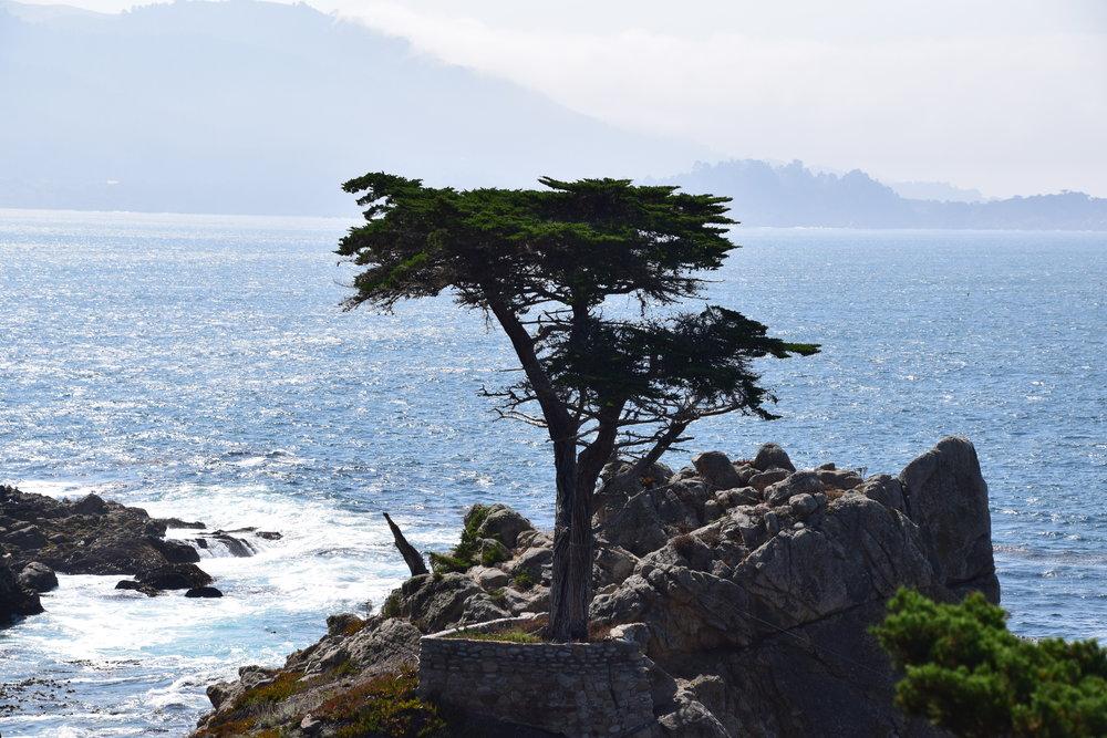 17-Mile Drive, Cypress Tree.