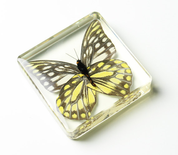 butterly in lucite.jpg