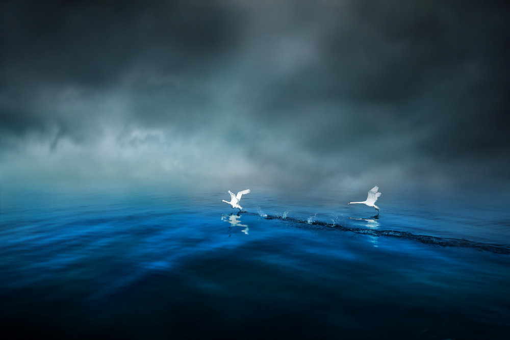 Swans of the cobalt blue lake