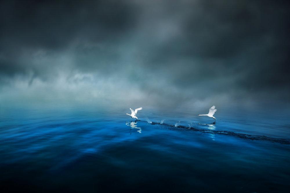 Swans of the cobalt blue lake.jpg