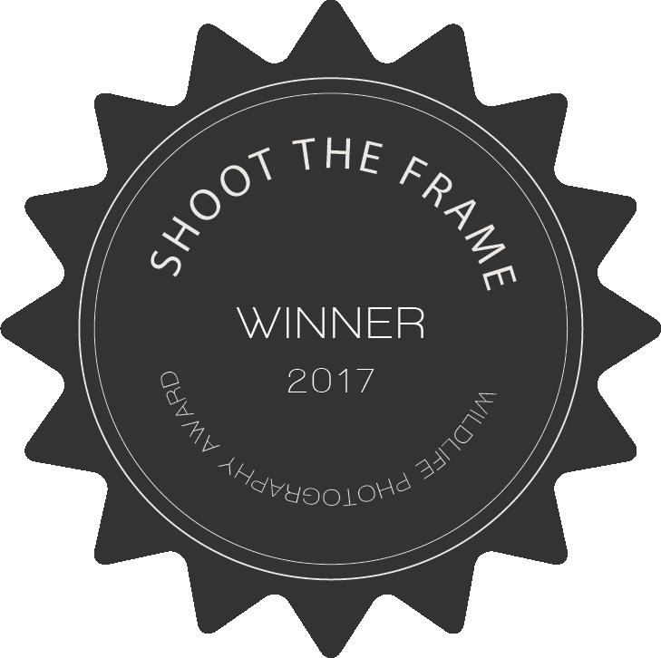 shoot_the_wild_winner_badge_2017.png