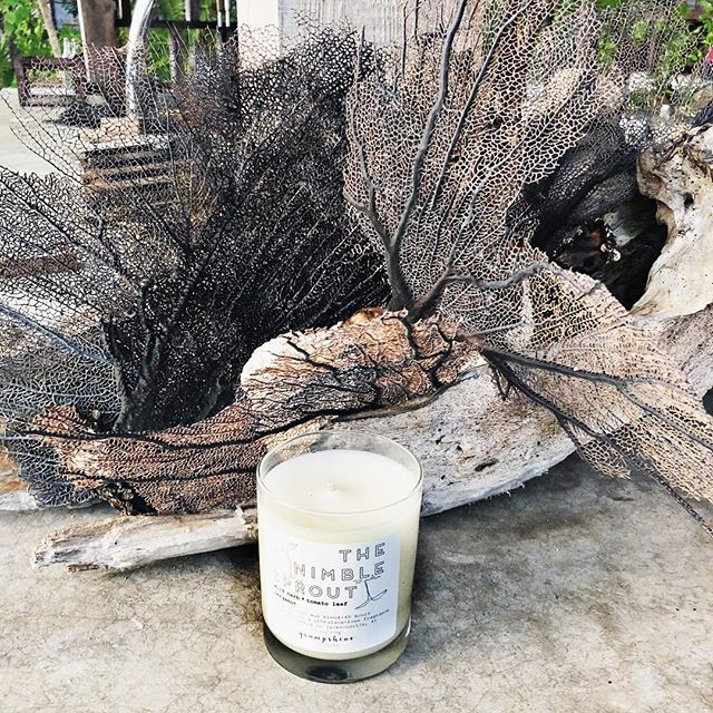 Among the beautiful fan coral in Tulum ✨🌴☀️🏝 #tulum #fancoral #ethicallymade #coconutwaxcandles #madeinjax  #jaxcreatives #wanderlust #travelcandle #igersjax #igersjaxbeach