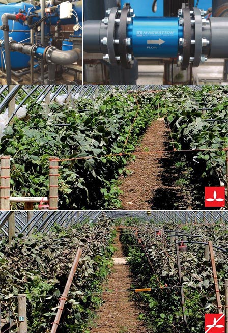 Magnation-for-drip-irrigation-watering-systems_better-yields.jpg