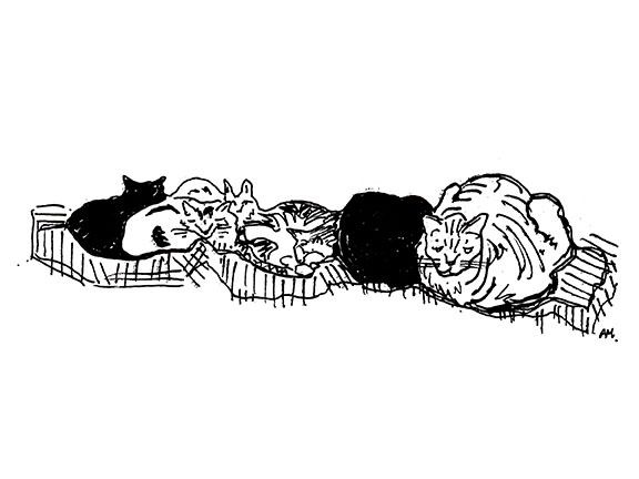 cats#1_72