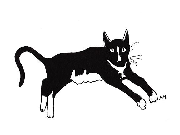 Cats#19_Tuxedo2_72