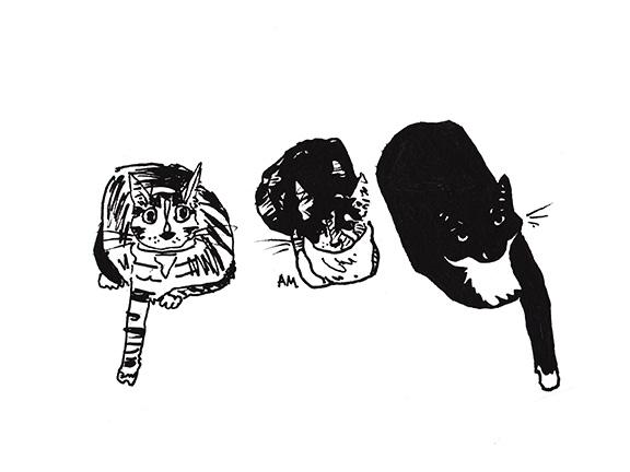 Cats#20_72