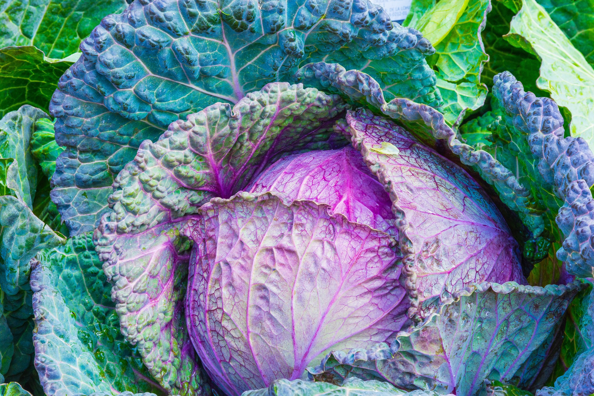 Eating too much cabbage