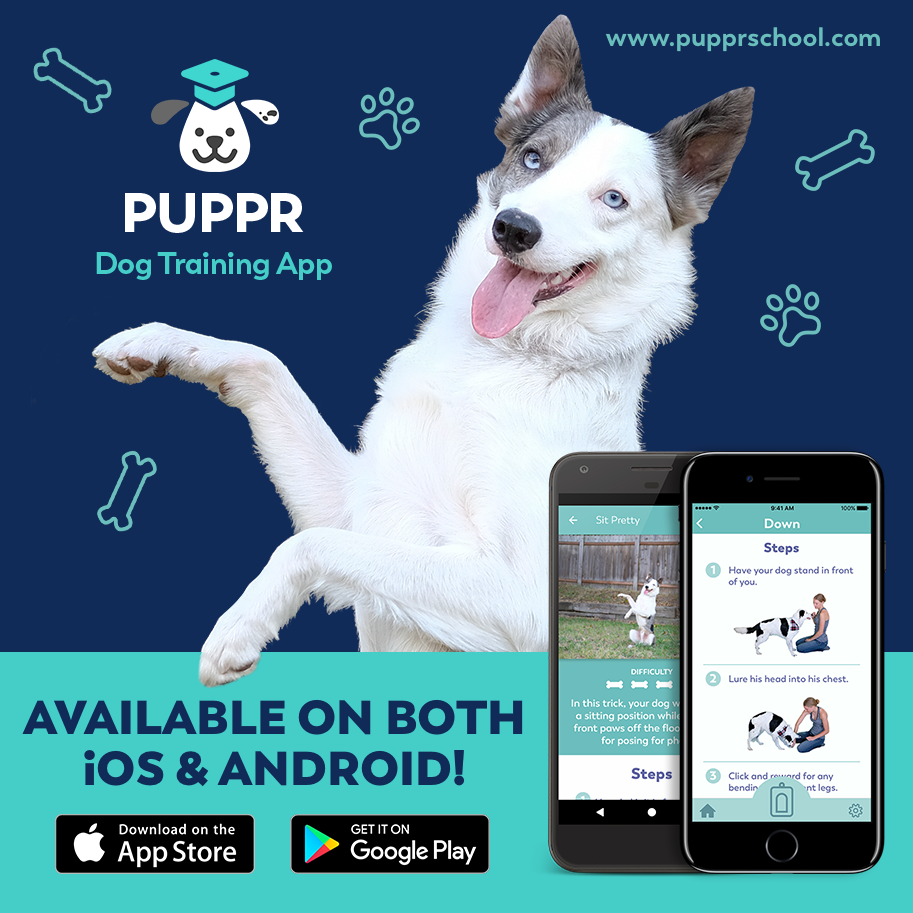 puppr_promo_ig_android_ios.png