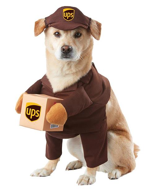 UPS Dog -