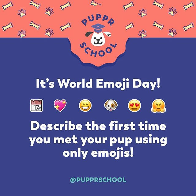 📆Today is World Emoji Day! Describe the first time you met your 🐶 using only emojis! Was there an immediate connection? Where were you? What was the weather like? Let us know 🐶💖🐾